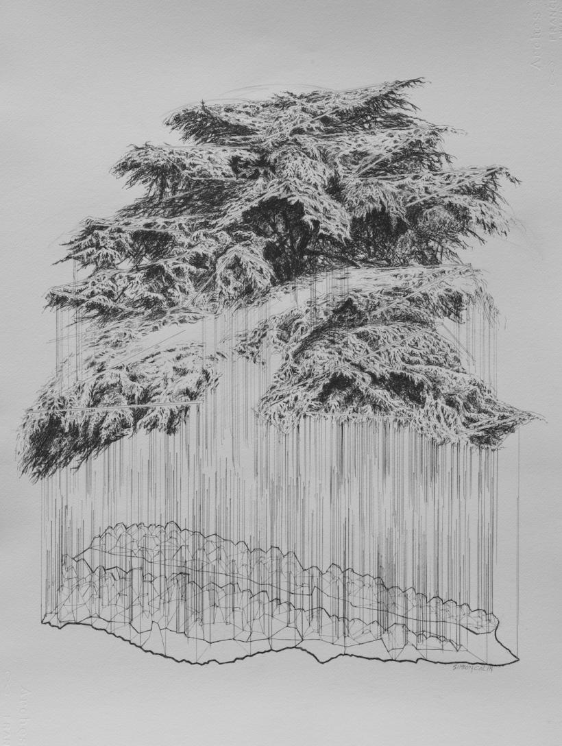 Cèdre et Liban, crayon sur papier, 100 x 70 cm.