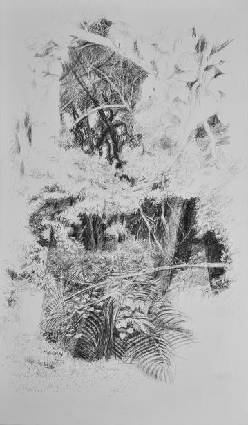 Forêt du Brésil n°1, crayon sur toile vernie, 196 x 114 cm, 2015