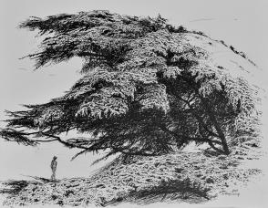 Abri, encre de Chine sur papier, 50 x 40 cm, 2015