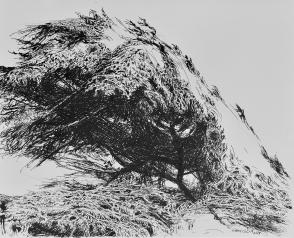 Bivouac, encre de Chine sur papier, 30 x 40 cm, 2015 (collection privée)