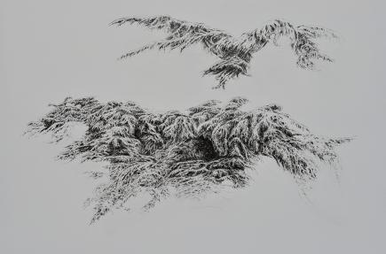 Grand vol n°2, encre de Chine sur toile vernie, 100 x 65 cm, 2016