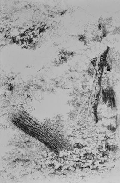 Branche, crayon sur toile vernie, 147 x 98 cm, 2015