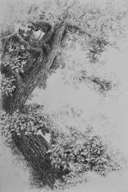 Fragment de chêne, crayon sur toile vernie, 146 x 98 cm, 2015 (collection privée)