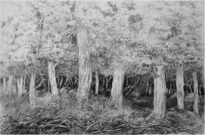 La Forêt du Petit Poucet, crayon sur toile vernie, 196 x 130 cm.