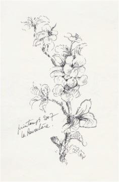 Croquis Fleur de pommier, 2007.